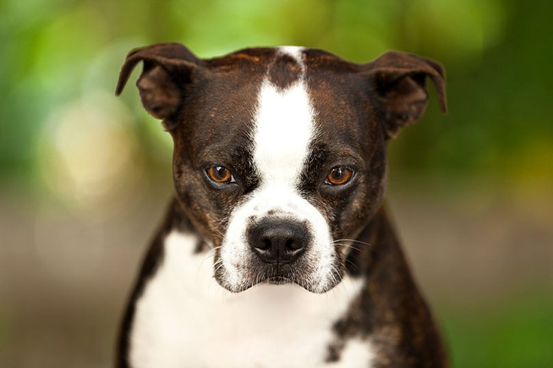 Probiotics and skin allergies in dogs symptoms