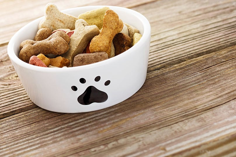 Dog food in a white bowl