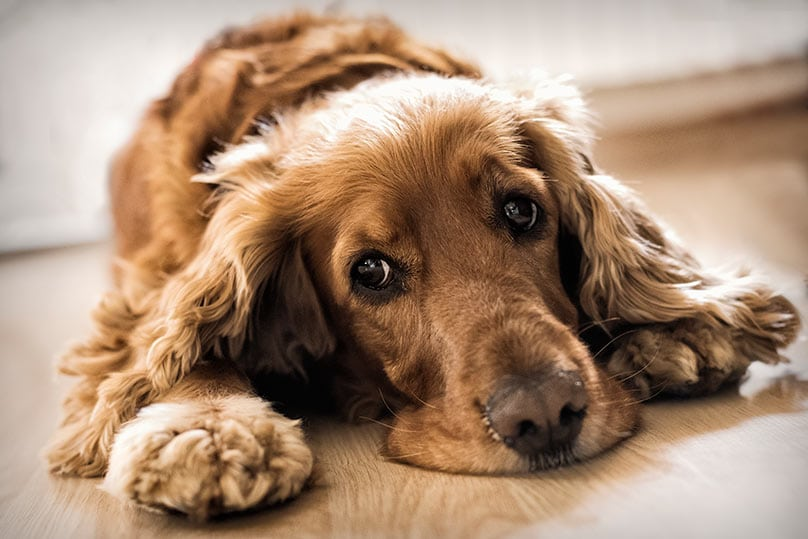 Probiotics For Dogs With Diarrhea
