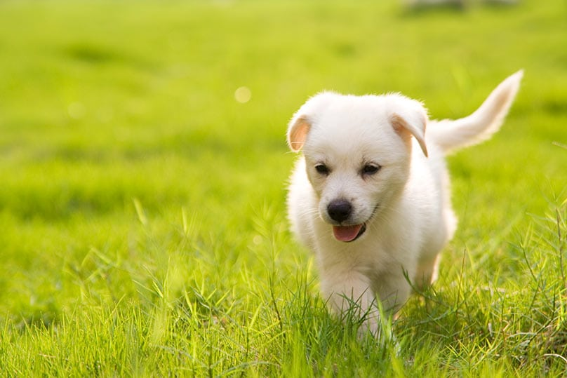 Give Dogs Probiotics