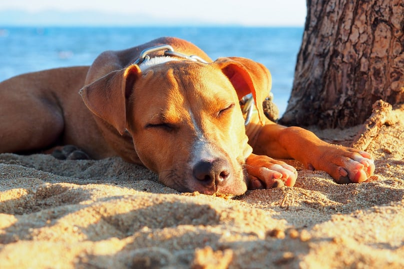 Dog asleep by tree on the beach